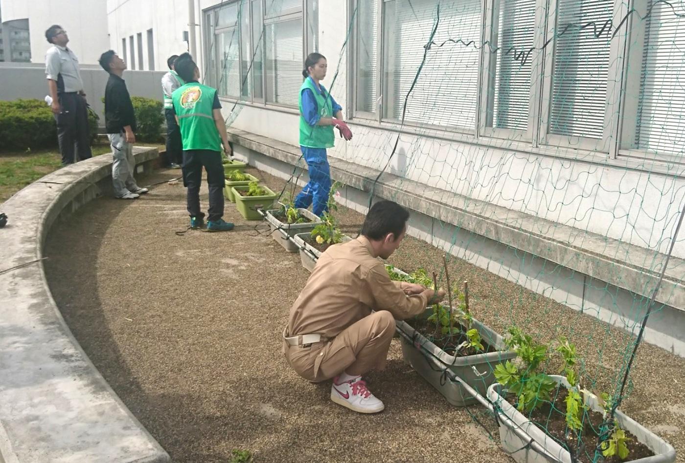 環境部会グリーン作戦